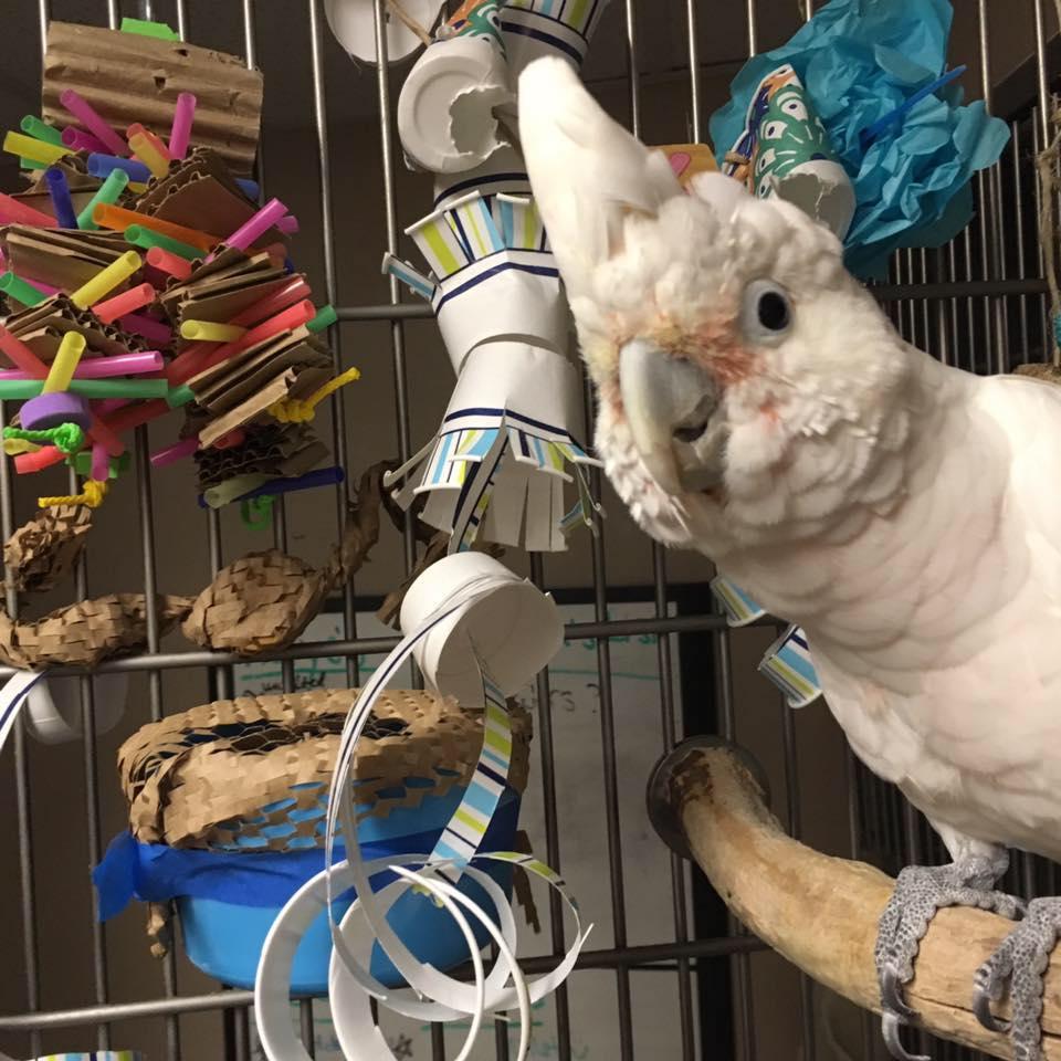 Busy Beaks Academy
