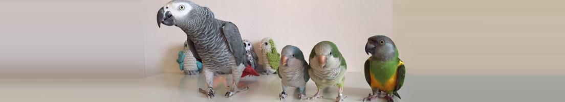 Doctors - Medical Center for Birds - Oakley, CA